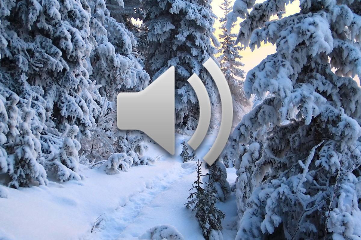 Зимние звуки окружения